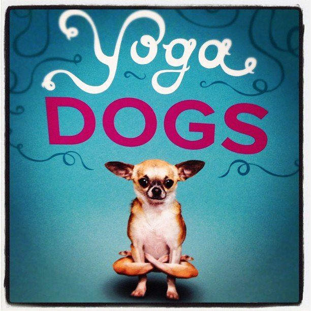 Perfect book for #yoga and #dog lovers #soulscapelife #downwarddog